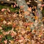 Complete-Leaf-Removal-hover2